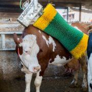 щетка-чесалка для коров
