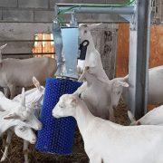 маятниковая щетка для коз и овец